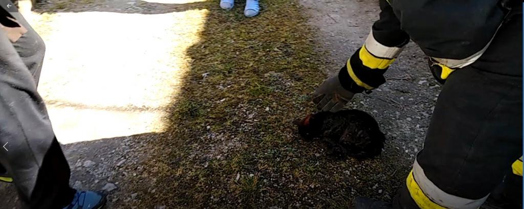 Kiscicát mentettek a tűzoltók Kehidakustányban című videó előképe